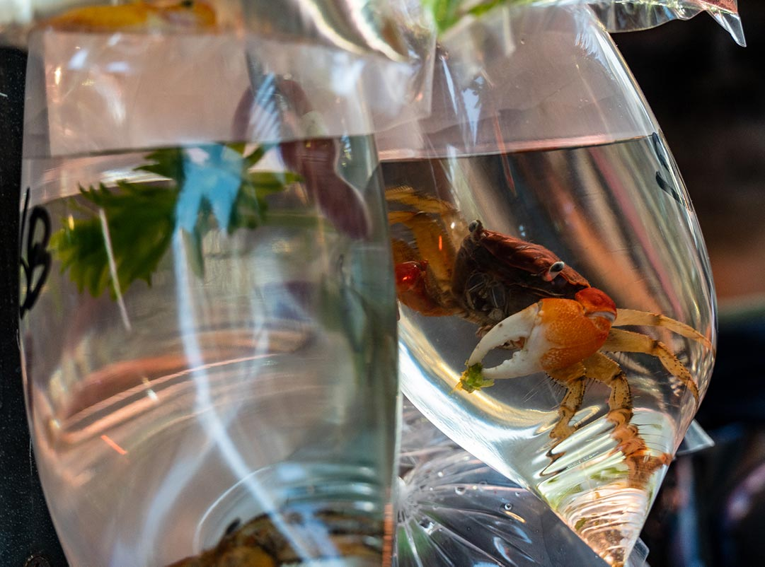 Crab in a bab - Hong Kong Goldfish Market