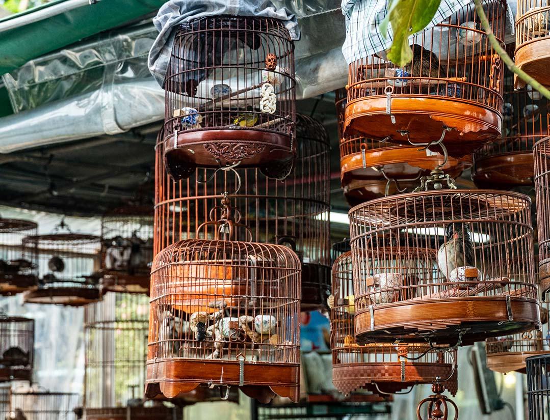 Hong Kong - Yuen Po Bird Garden