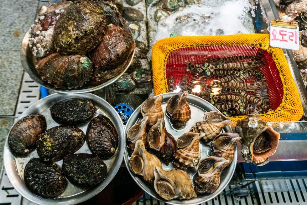 Busan - Jagalchi Seafood Market - fresh shellfish