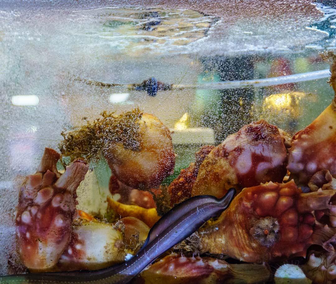 Busan - Haeundae Beach Night Market - Live seafood-Sea Pineapples