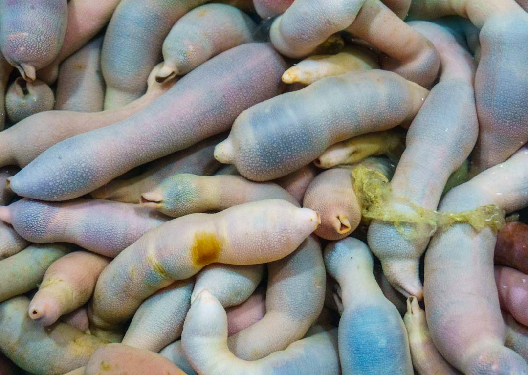 Busan - Haeundae Beach Night Market - Live seafood - fat innkeeper worm