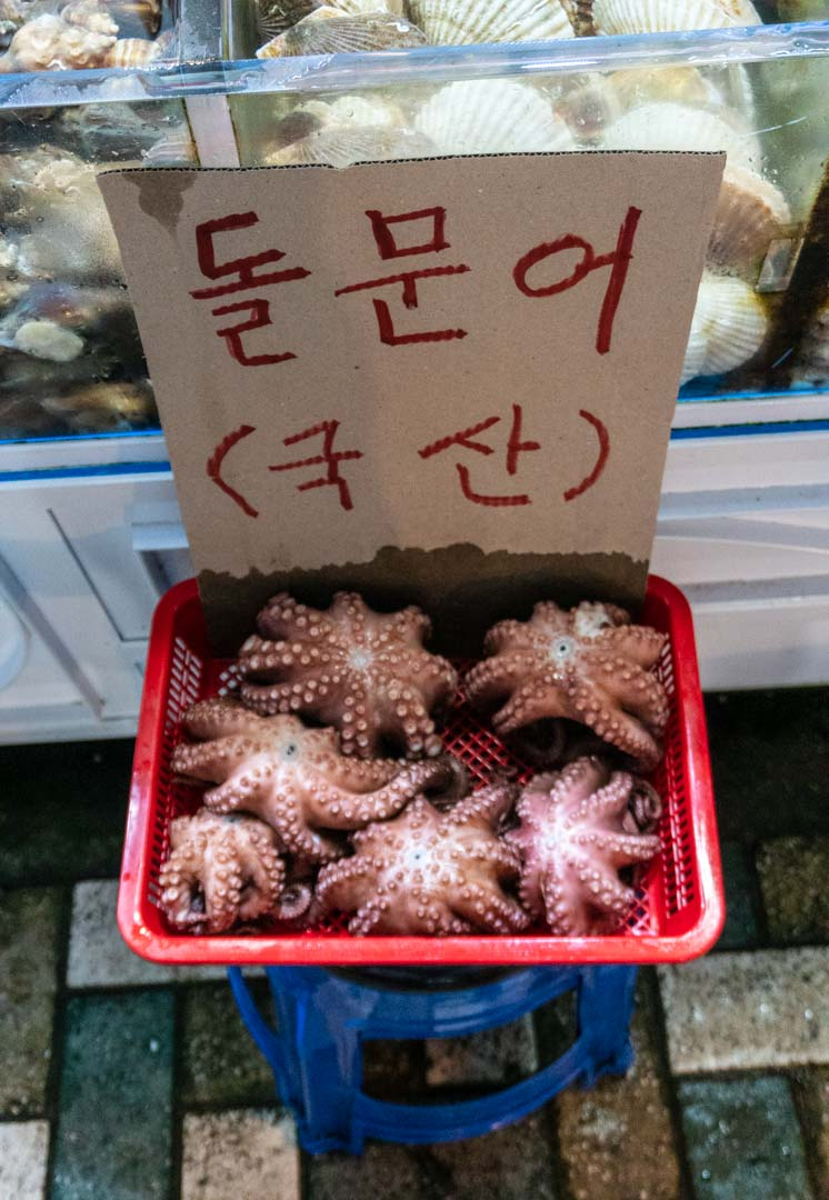 Busan - Haeundae Beach Night Market - Live seafood-Octopus