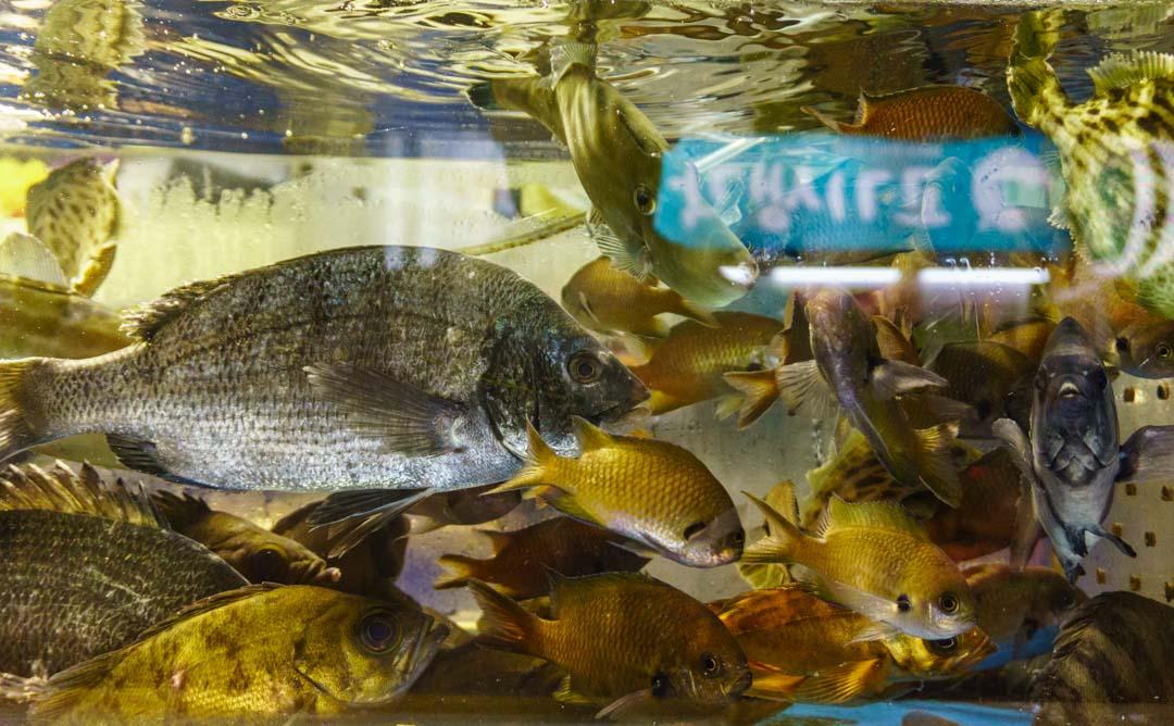 Busan - Haeundae Beach Night Market - Live seafood-Fish